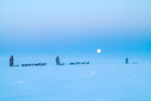 Dogsledding on the Finnmark Plateau with ENholm Husky