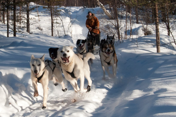 Dogsledding at Engholm Husky Lodge