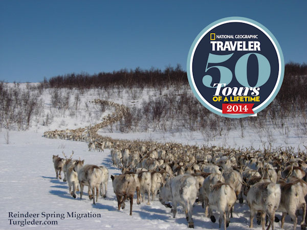 Reindeer migration Tour of a life time