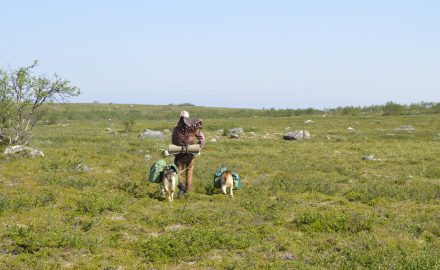 Wilderness tour with pack dogs – 7 days